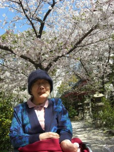〇葉桜も一興〇